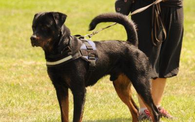 Testy temperamentu dla psów w Hamburgu – relacja z wizyty