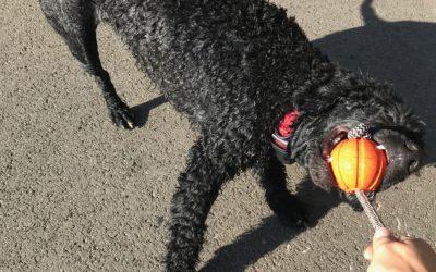 Radość utracona, czyli kilka faktów i mitów na temat życia z psem