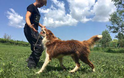 Zabawa psów (cz. 2): zabawa pies – człowiek