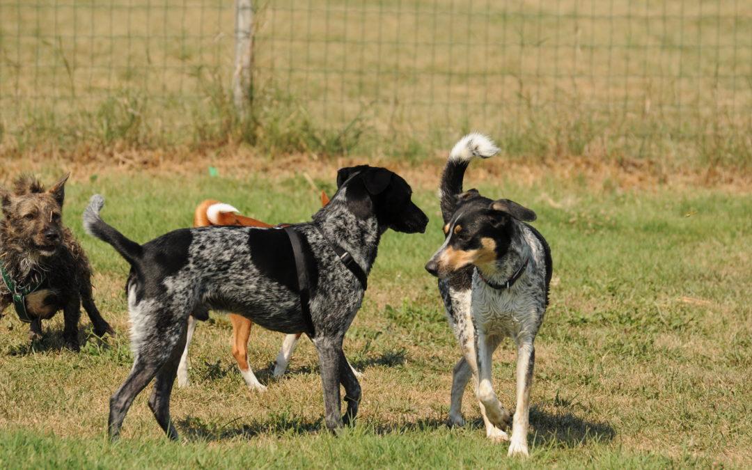 Komunikacja psów – kontrola przestrzeni