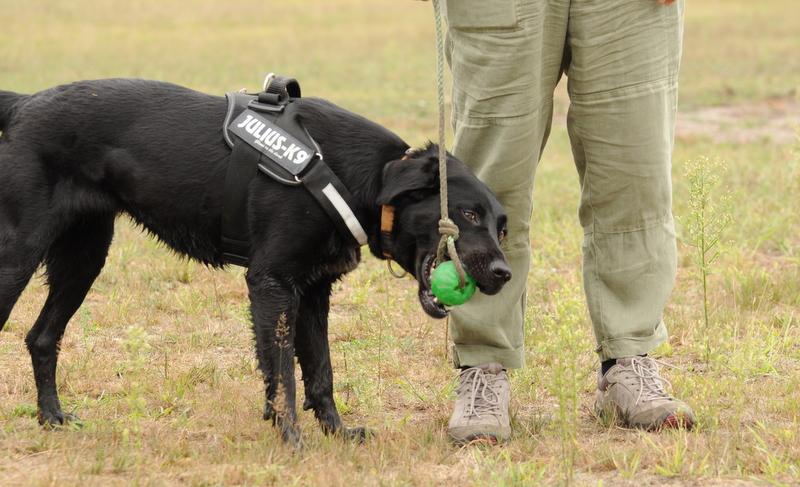 Zabawa psów (cz. 3): strategie radzenia sobie, czyli coping