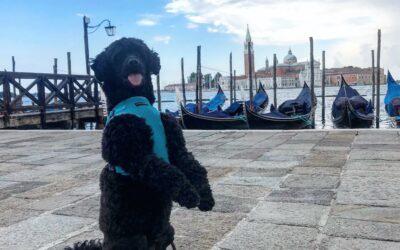 Moje małe włoskie wakacje, czyli z psem po Europie